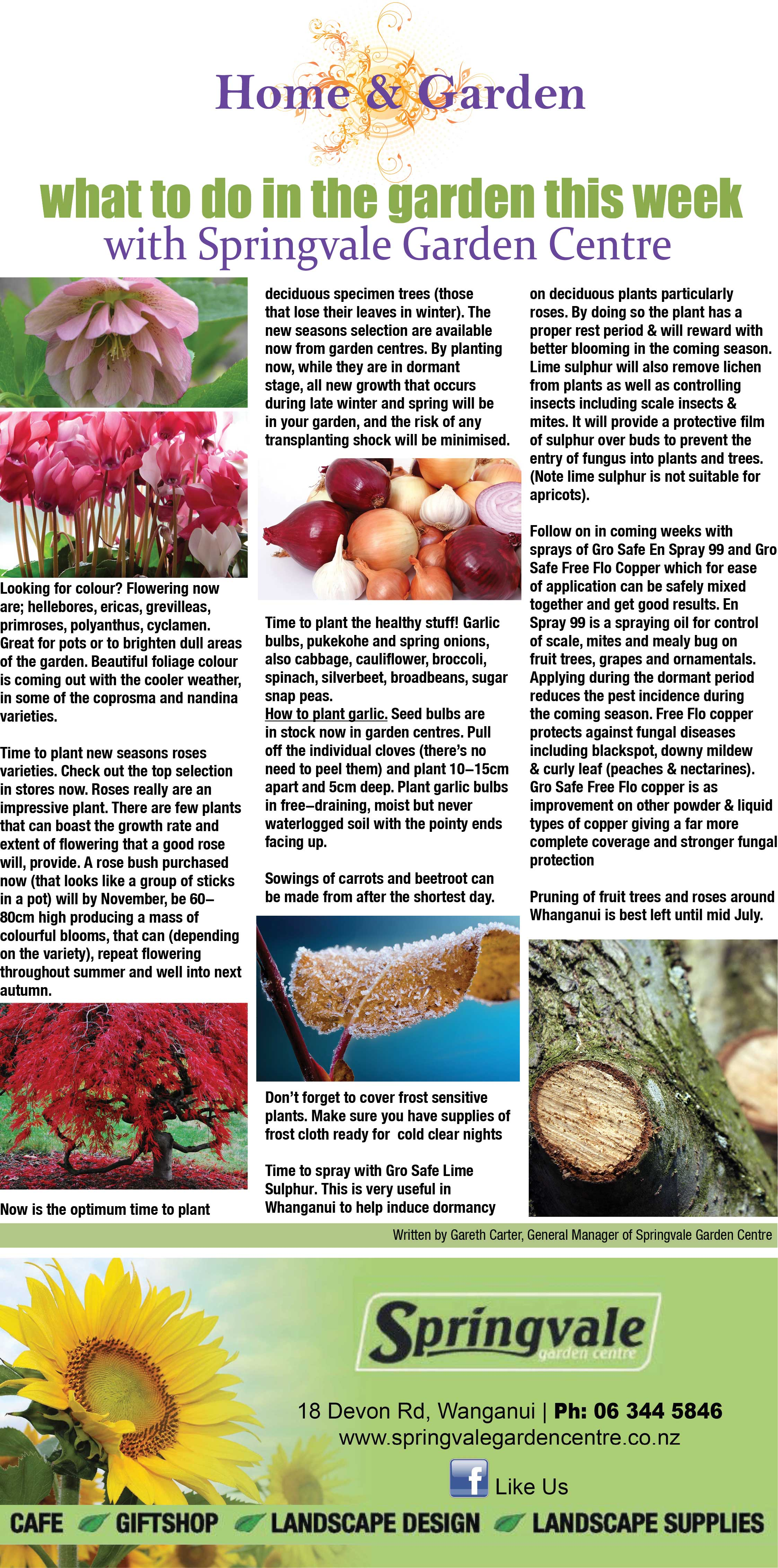 Home & Garden: June 16, 2017: Plant colour & deciduous trees ... Onion Tree Plant Home on tree home furniture, tree patio, tree home design, tree interior, tree home water, tree bathroom,