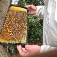 Bees - a hiccup - the Queen has moved on!