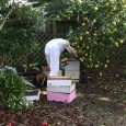 Rick checking out the hives