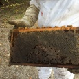 this frame full of honey collected in winter