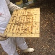 Just checking the bees and honey progress