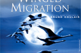 Winged Migration