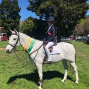 Congratulations to Jaime Hogg on Step It Up winning the Pony Equitation Showhunter class which is judged on the rider & also received some 3rds & 4ths in other classes jumping up to 1m; The Royal A & P Show Hawkes Bay 17-19 October 2018.