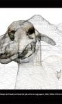 Sheep Jet Head